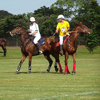 Ashys Tack Shop Polo & Polocrosse